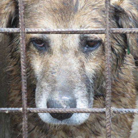 der-traurigste-hund-der-welt-tierschutz-shop-prodogromania