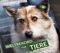 Vorschau-Magazin