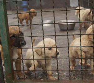 Andeo-Hundenothilfe-Rettet-die-Welpen-Tierschutz-Shop