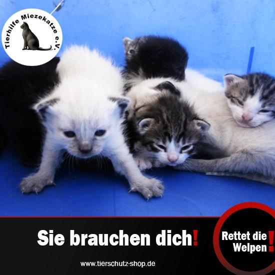 Tierhilfe-Miezekatze-Rettet-die-Welpen.png