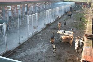 Auffangstation Streunerhilfe Bulgarien