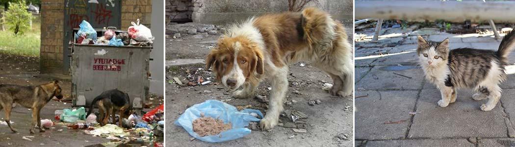Streunerhilfe-Bulgarien