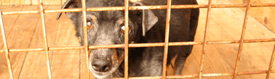 Tierschutz_Shop_Spendenplattform_THdM_Tierhilfe-Help-me-e.V._März_2018