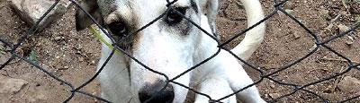 Tierschutz_Shop_Spendenplattform_THdM_FOS_Thassos_Maerz_2019_THDM-Seite_400x115
