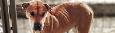 Tierschutz_Shop_Spendenplattform_THdM_Fellnasen_Nothilfe_Januar_2019_THDM-Seite_400x115