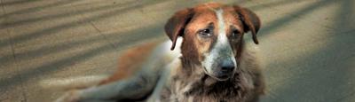 Tierschutz_Shop_Spendenplattform_THdM_Notstand-in-Russland_Mai_2018_400x115