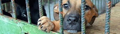 Tierschutz_Shop_Spendenplattform_THdM_Tierhilfe_Hands4Paws_Januar_2018