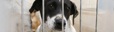 Tierschutz_Shop_Spendenplattform_THdM_Tierhilfe_Phoenix-eV_Juli_2018_400x115