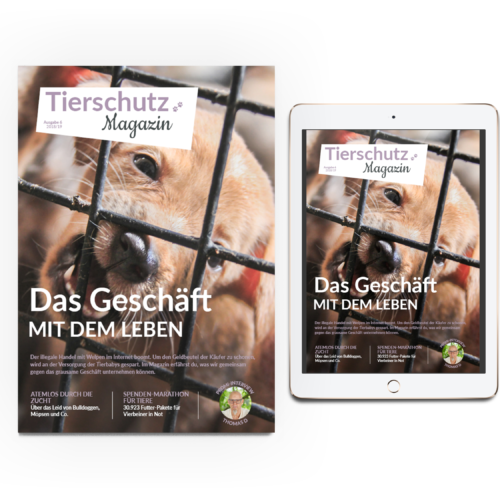 Magazin Ausgabe 6 iPad