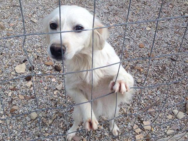 Vergessene Samos Hunde