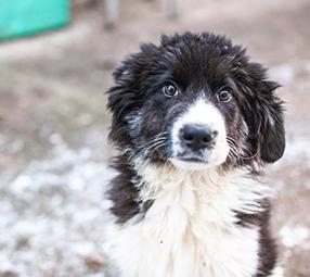 Spenden-Marathon-für-Tiere-2017-im-Tierschutz-Magazin