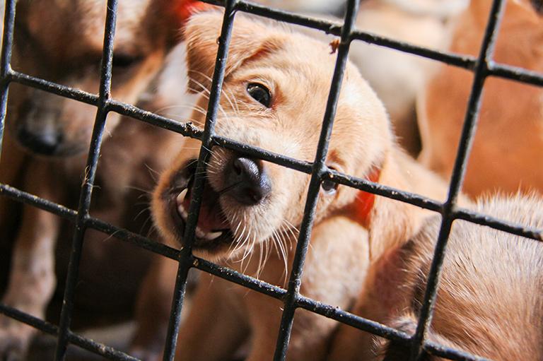 Tierschutz-Magazin-Titelthema-Illegaler-Welpenhandel