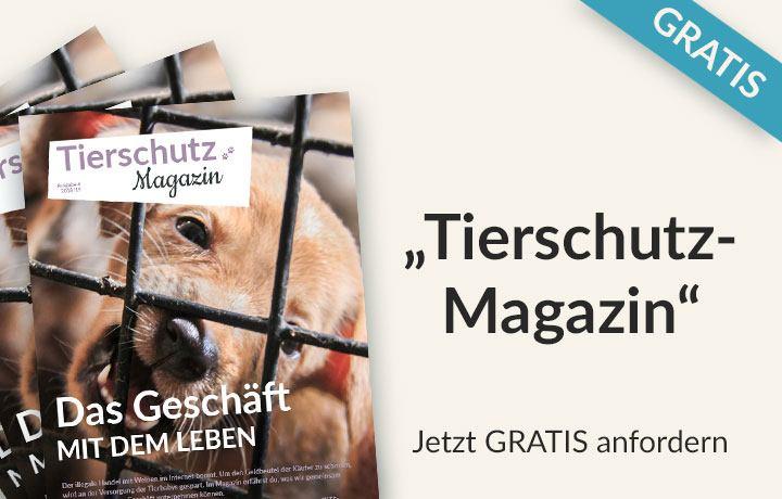 tierschutz-magazin-header-mobil_2