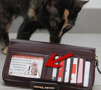 Visitenkarte-in-Not-fuer-Katzen