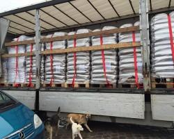 Weltrekord-für-Tiere-Tierschutz-Shop-Fellnasen-Nothilfe-Spenden-3