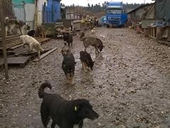 Freundeskreis für Straßenhunde in Campulung Spenden Tierschutz-Shop 5