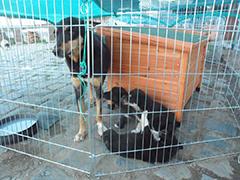 rumänien hunde spenden tierschutz-shop fellnasen nothilfe