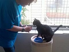 menschen-für-tiere tierheim köln spenden tierschutz-shop