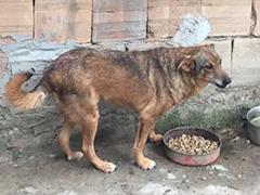 streunerhilfe-bulgarien-hunde tierheim futter spenden helfen tierschutz-shop