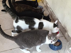 streunerhilfe-bulgarien-katzen tierheim spenden tierschutz-shop