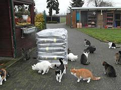 Tierheim Surwold Spenden Tierschutz-Shop