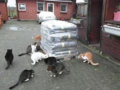Katzenfreiheit Surwold Spenden Tierschutz-Shop