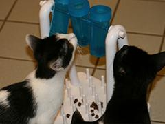 tierheim-lübbecke-2katzen helfen spenden tierschutz-shop
