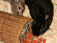 tierheim-lübbecke-Kleintiere spenden tierschutz-shop