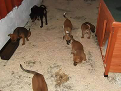 ungarische-hundehilfe-welpen helfen spenden tierschutz-shop