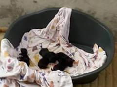 ungarische-hundehilfe-tierheim ungarn welpen spenden tierschutz-shop
