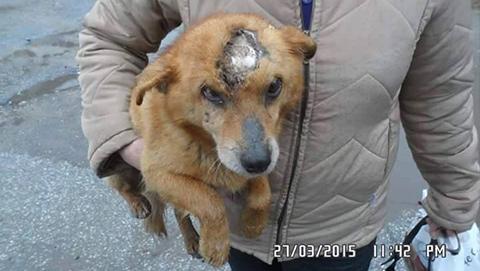 Spende für Tiere Tierschutz-Shop Bunu