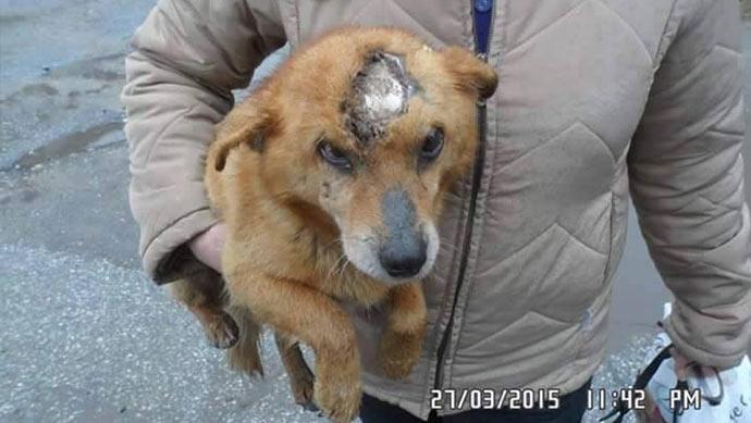 Verletzter Hund Bunu auf dem Arm einer Tierschützerin