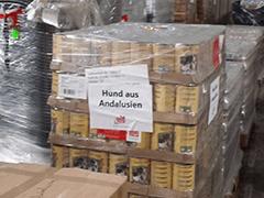 Hund-aus-Andalusien-Tierschutz-Shop-Futter-Spenden