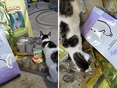 Kami-Katze Samtpfotenhilfe Spenden Tieschutz-Shop helfen
