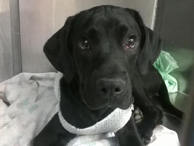 Tierschutz-Spanien 10% Prämie Tierschutz-Shop PomPon