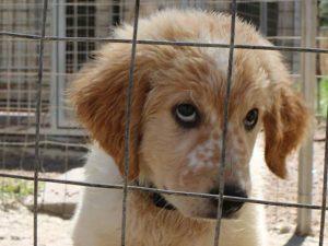 SardinienHunde Tierschutz-Shop Tieren helfen Spenden