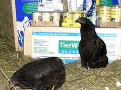 TSV-BaFfa-Tierschutz-Shop-Futter-spenden