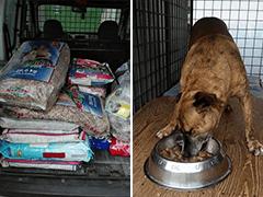 Tierhilfe-Help-Me-Tierschutz-Shop-Futter-spenden