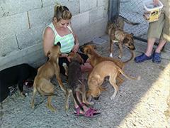 Bobbys Tiere Bulgarien Spenden Tieschutz-Shop helfen