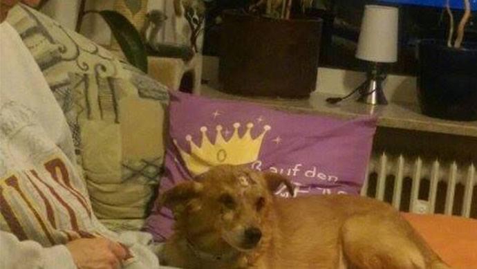 Hund Bunu auf dem Sofa in seinem neuen Zuhause