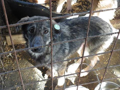 Fellnasen-Nothilfe Rumänien Hunden helfen Tierschutz-Shop Spenden