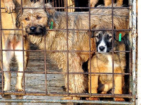 ProDogRomania Rumaenien Hunden helfen Tierschutz-Shop Spenden