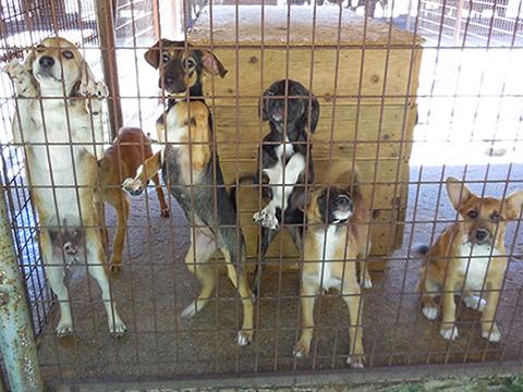 Tierhilfe Hoffnung Smeura Rumänien Hunden helfen Tierschutz-Shop Spenden