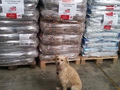 Vergessene Samos Hunde Griechenland Spenden Tieschutz-Shop helfen