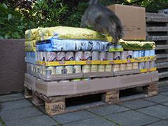 Straßenkatzen Köln e.V. Spenden Tieschutz-Shop helfen