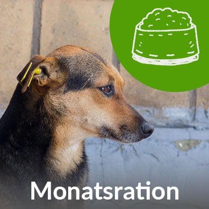 Monatsration-Hund_