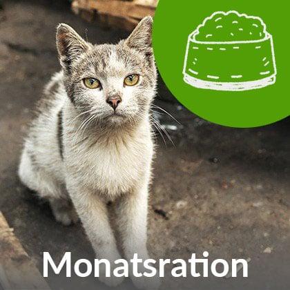 Monatsration-Katze_