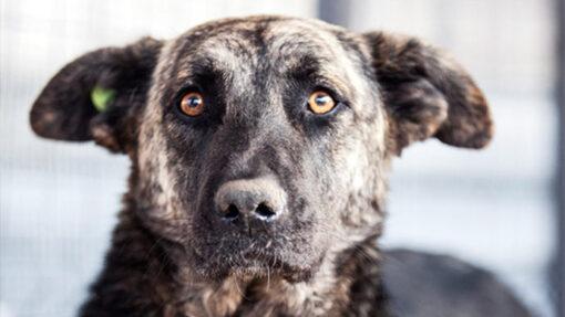 Tierschutz-Shop stellt einen Weltrekord für Tiere auf.