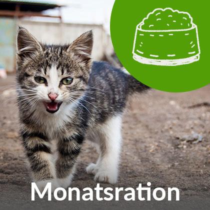 Monatsration-Kitten_