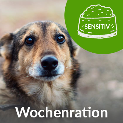 Wochenration-Hund-Sensitiv_